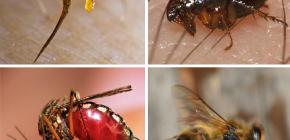 Erste-Hilfe-Regeln für Insektenstiche: Was zuerst zu tun ist