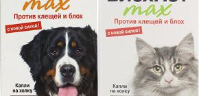 Bedeutet Blohnet für Katzen und Hunde: Bewertungen und Gebrauchsanweisungen