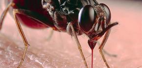 Über Insektenbisse und ihre Behandlung