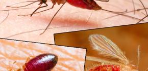 Bites von verschiedenen Arten von Insekten und ihre Fotos