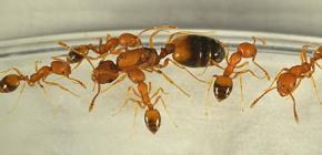 Woher kommen Ameisen im Haus und musst du Angst vor ihnen haben?
