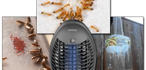 Übersicht über effektive Fallen für fliegende und kriechende Insekten