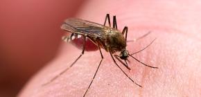 Mittel zum Schutz vor Insektenstichen: eine Überprüfung der effektiven Optionen