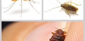Insektizide Insektenabwehrmittel in der Wohnung: eine Überprüfung von Drogen