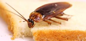 Wie kann ich Kakerlaken in der Wohnung loswerden?