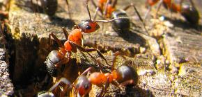 Wie Ameisen sich auf den Winter vorbereiten