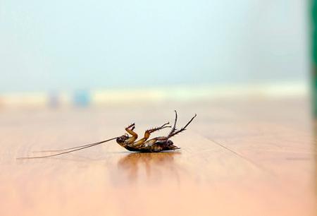 Wählen Sie ein wirksames Gift für Kakerlaken