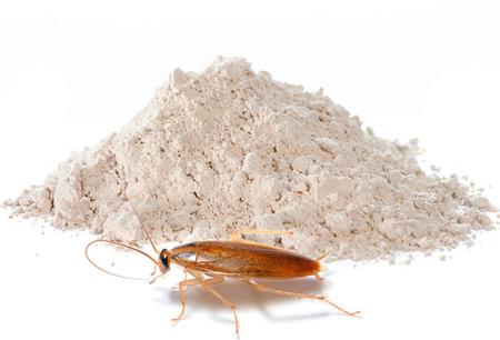 Pulver für die Vernichtung von Kakerlaken: Eine Überprüfung der effektiven Mittel