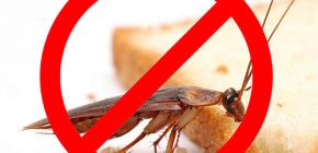 Die Zerstörung von Insekten: nützliche Tipps und wichtige Nuancen