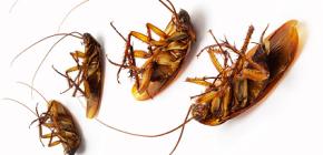 Plots gegen Kakerlaken