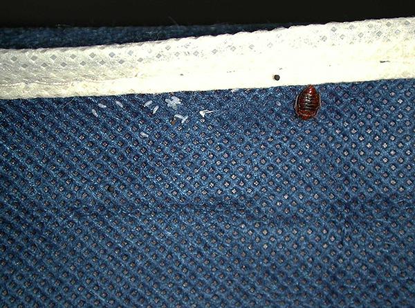 Parasiten können mit Kleidung aus dem kontaminierten Raum ins Haus gebracht werden.