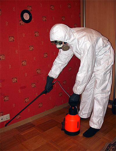 Desinfektion der Wohnung von Kakerlaken