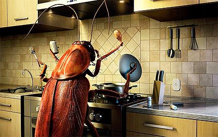 Sauberkeit in der Küche und in der Wohnung als Ganzes ist der Schlüssel zu einem erfolgreichen Kampf gegen Kakerlaken