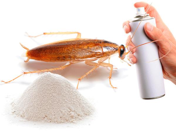 Ein Heilmittel für Kakerlaken in der Wohnung wählen ...