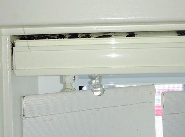 Insektizides Spray gelangt leicht in abgelegene Orte, wo sich oft Kakerlaken verstecken.