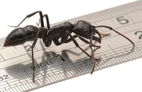 Berechnen Sie, wie viele Ameisenbeine sind