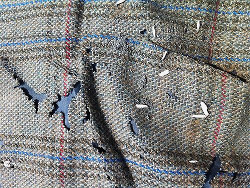 Jede Mottenlarve ist ein neues Loch in Ihrem Lieblings-Pullover oder Mantel