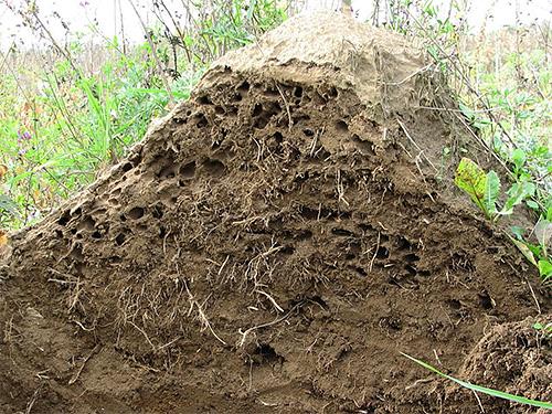Ein Ameisenhaufen ist ein komplexes und hochorganisiertes System