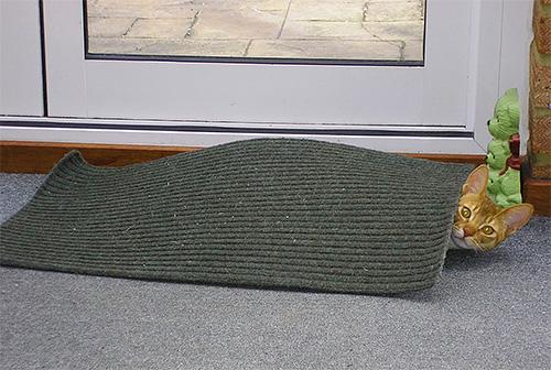 Um das Auftreten von Flöhen in einem Haustier zu verhindern, müssen Sie regelmäßig alle Matten und Bettwäsche ausschütteln.