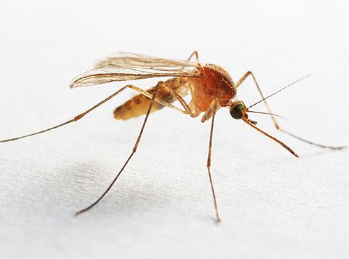 Insekten im Badezimmer und Toilette - warum haben sie ...