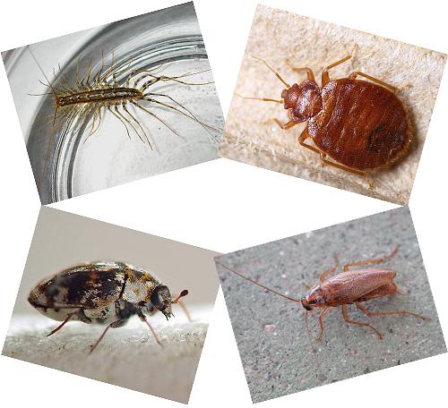 Im Haus neben einer Person können viele Insekten leben, über die wir weiter sprechen werden, mit Fotos, einer Beschreibung der Lebensweise und der Folgen der Nachbarschaft mit ihnen.