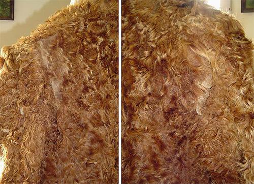 Die Motte, die in Ihrem Haus lebt, kann Pelzprodukte erheblich schädigen.