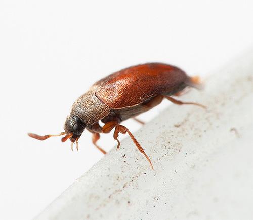 Mit kozheedi Käfern wissen die Leute oft gar nichts von der Nachbarschaft ...