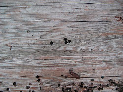Die Spuren des Käferschleifers