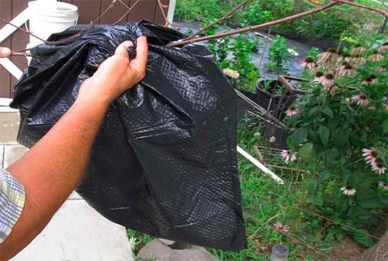 Auf dem Hornissennest, das an einem Ast hängt, kannst du einfach einen Beutel mit einer Giftlösung hineinlegen.