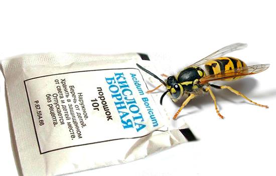 Borsäure wirkt nicht nur gegen Kakerlaken, sondern auch gegen Wespen.