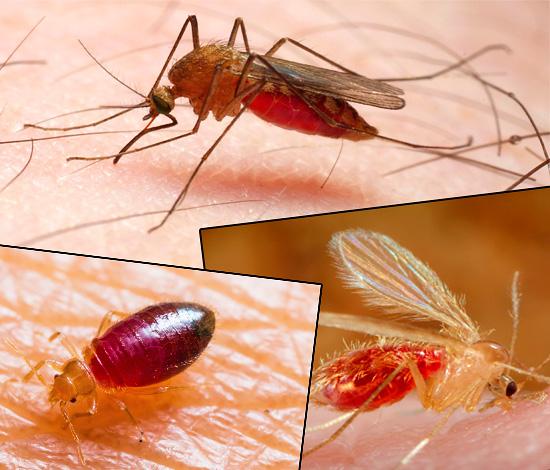 Die Bisse verschiedener Insektenarten unterscheiden sich deutlich im Aussehen, und die Fotos zeigen dies deutlich ...