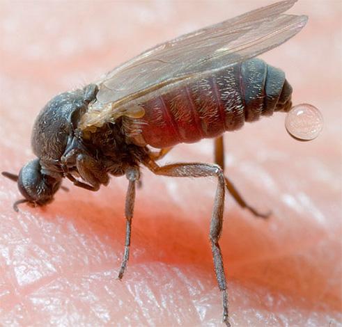 Insektenstiche, zum Beispiel in der Taiga (Mücken), können zu sehr schwerwiegenden Folgen führen, wenn sie nicht zu Beginn geeignete Schutzmaßnahmen ergreifen.