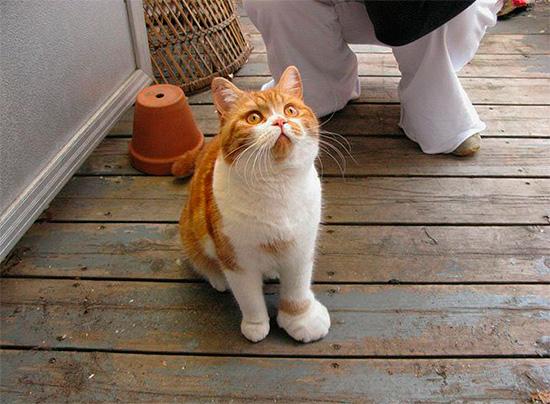 Der Biss einer Wespe bei Katzen und Hunden führt zu einer Schwellung der betroffenen Stelle - genau wie beim Menschen.