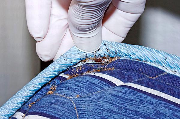Parasiten blieben lebensfähig, obwohl die Matratze für ein halbes Jahr in Plastik verpackt war.