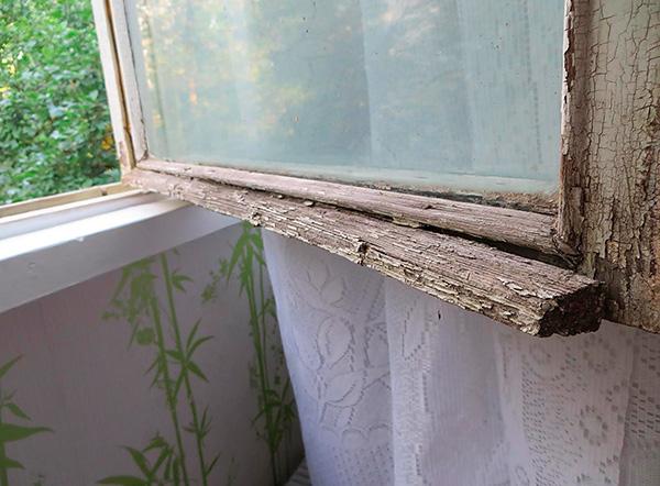Wanzen können die Wohnung durch die Außenwand des Gebäudes durch die Schlitze in den alten Fenstern betreten.