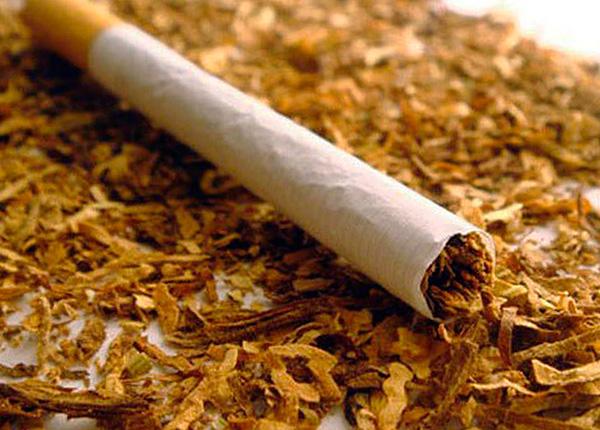 Tabak (bzw. Nikotin) ist ein hochwirksames Mittel zur Insektenvernichtung.