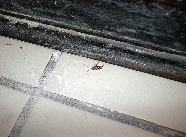 Je länger das Insektizid von den Behandlungsstellen entfernt wird, desto höher ist die Wahrscheinlichkeit, dass alle Kakerlaken mit ihm in Kontakt kommen.